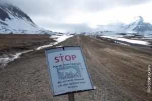 Danger des ours polaire au Spitzberg